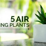 5-Air-Cleaning-Plants