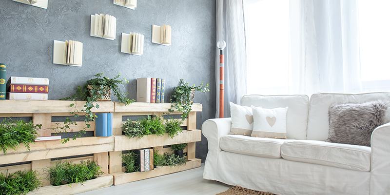 Use Air Purifying plant for Home