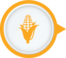 Keeps Food Fresh � Kent Vegetable Purifier & Washer